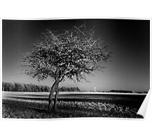 Bare Tree and the Papal Cross - Phoenix Park Poster
