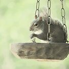 Bird Feeder? by DottieDees