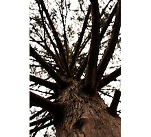 tree from the nature trail Photographic Print