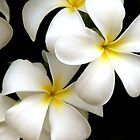 Yellow Plumeria by Brian Harig