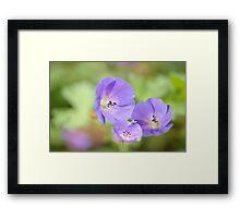 Herb-Robert Framed Print