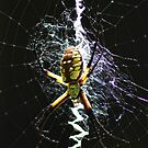 Orb Spider by ☼Laughing Bones☾