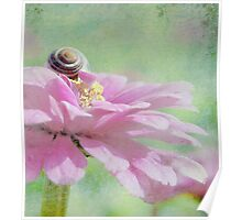 Snail on Petals  Poster