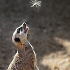 Meercatching fairies! by LisaRoberts