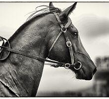 Elegance in the rain by Natalie Winter
