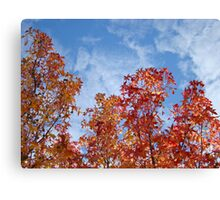 Autumn Trees art prints Blue Sky White Clouds Fall Leaves Canvas Print