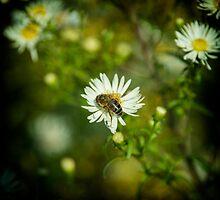 Bee  by Rob Hawkins