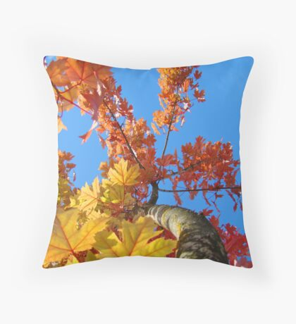Fall Tree Looking Up Blue Sky Colorful Leaves art prints Throw Pillow