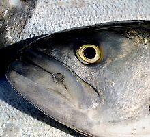 Bluefish by nadinecreates