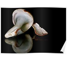 Shells-Reflections Poster