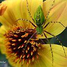 Green Lynx Spider by Mattie Bryant