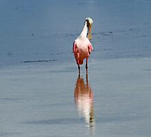 Ok birds lets show our spoonbills! by jozi1