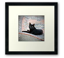 Black Cat on a Persian Rug Framed Print