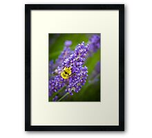 Lavender & Bumble Bee Framed Print