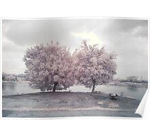 ir _ trees Poster