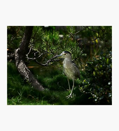 Heron checking out new digs Photographic Print