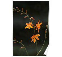 triplet flower Poster