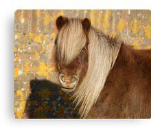 Autumnal pony Canvas Print