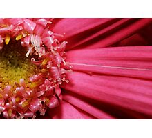 See The Beauty Up Close Photographic Print