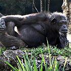 Pensive Chimp by Irina777