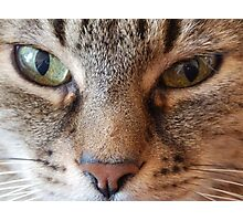 Hypnotizing eyes Photographic Print