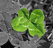 Four leaf Clover by Furtographic