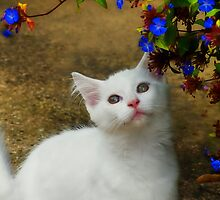 Bailey the Kitten :) by Susie Peek