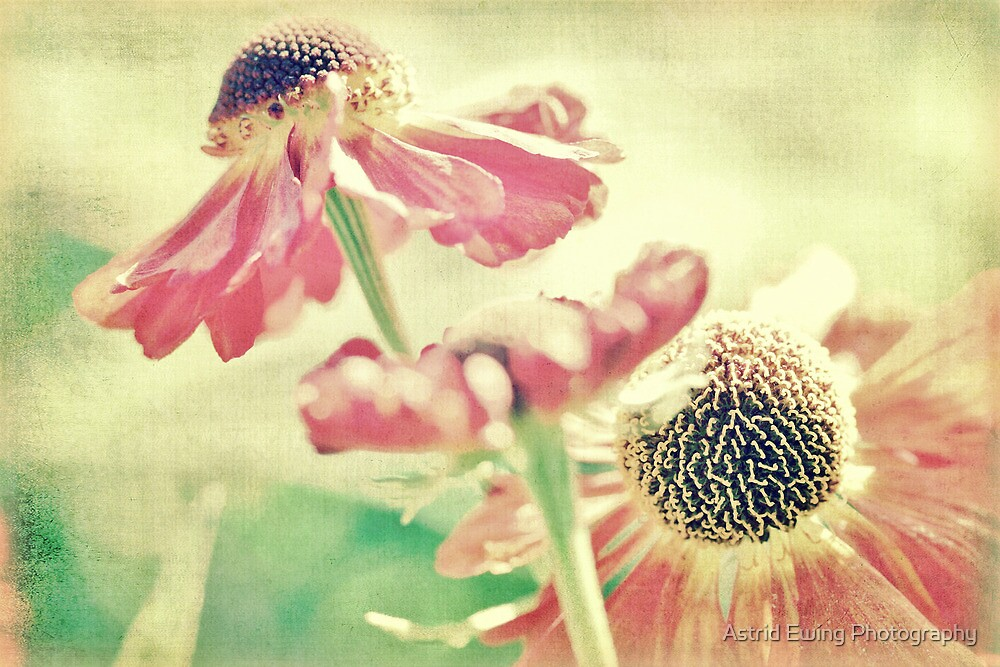 Charming... by Astrid Ewing Photography