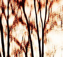 shadows of trees III by novopics