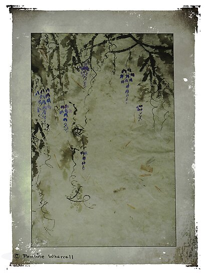 The beauty of wisteria by © Pauline Wherrell