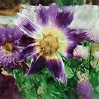 Sunburst in Lavender by RC deWinter