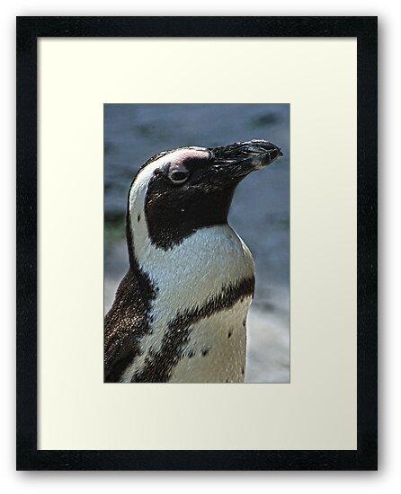 Penguin by ☼Laughing Bones☾