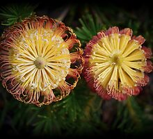 Banksia Spiralling ( 4 ) - Day by Day by Larry Lingard-Davis