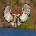 Ibis Landing by Lamprecht