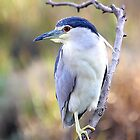 Night Heron by Lamprecht