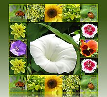 End of Summer Floral Collage in Reflection Frame by BlueMoonRose