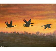migration at sunset Photographic Print