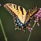 Butterfly close up by Jennifer P. Zduniak