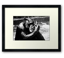We have a winner! Framed Print
