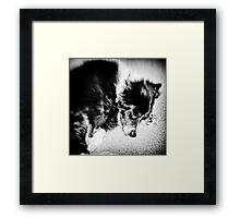 Sleeping Dog 2 Framed Print