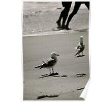 Delaware Beaches Poster