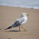 Seagull on beach in Delaware by Jennifer P. Zduniak