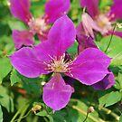 Vibrant purple flower by Jennifer P. Zduniak