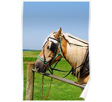 Amish Horse in PA Poster