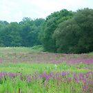 Purple flower field in NJ by Jennifer P. Zduniak
