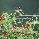 Morning Hummingbird by Jennifer P. Zduniak