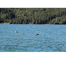Northern Sea Otters Photographic Print