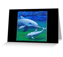 Dolphins Looking Back at You Greeting Card