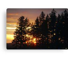 """Sunset Through The Trees"" Canvas Print"