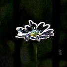 Daisy in Neon by Jennifer P. Zduniak
